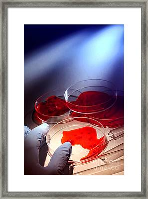 Forensic Examination Investigation In Crime Lab Framed Print by Science Research Lab By Olivier Le Queinec