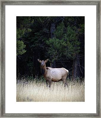 Framed Print featuring the photograph Forest Elk by Steve McKinzie