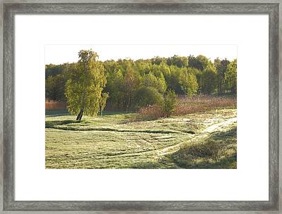 forest in Ainazi Framed Print