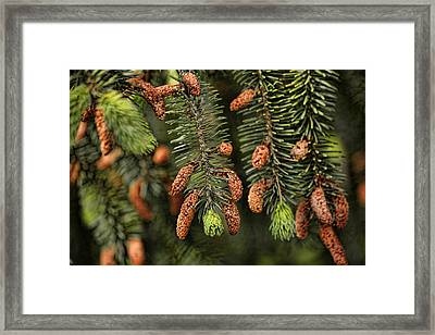Forest Treasures Framed Print by Bonnie Bruno