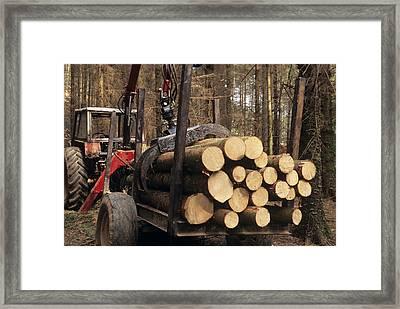 Forestry Framed Print by David Aubrey