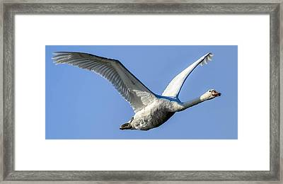 Freebird Framed Print by Brian Stevens