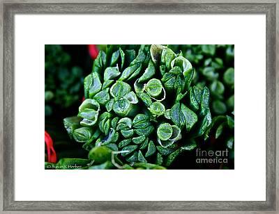 Fresh Chives Framed Print by Susan Herber