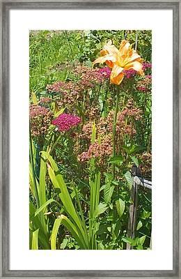 Garden Flowers  Framed Print by Thelma Harcum