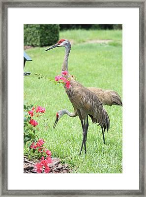 Garden Visitors Framed Print by Carol Groenen