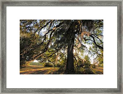 Gentle Breeze Framed Print by Jan Amiss Photography
