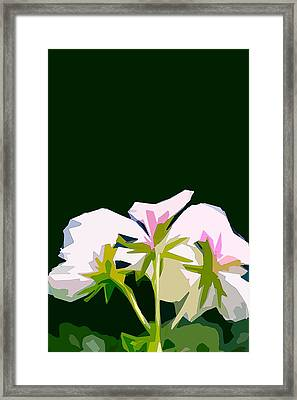 Geranium 3 Framed Print by Pamela Cooper