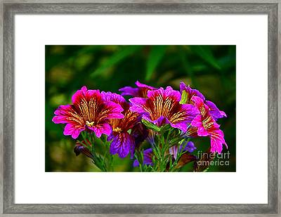 Gleaming In Purple And Gold Framed Print by Byron Varvarigos