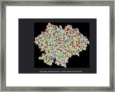 Glycogen Phosphorylase, Molecular Model Framed Print by Francis Leroy, Biocosmos