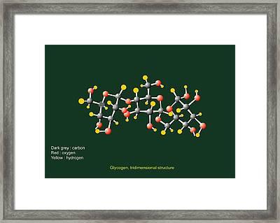 Glycogen Units, Molecular Model Framed Print by Francis Leroy, Biocosmos