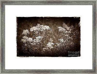 Going To Seed Framed Print by Judi Bagwell