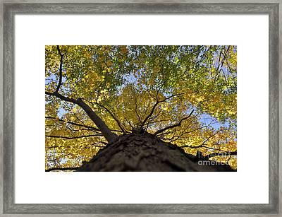 Going Up Fall Framed Print