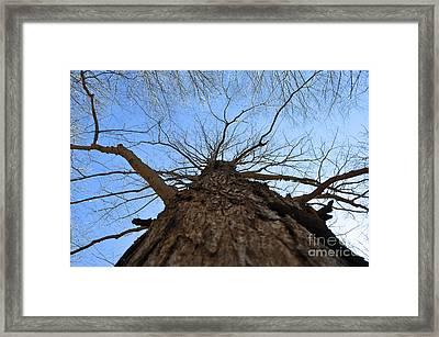 Going Up Winter Framed Print