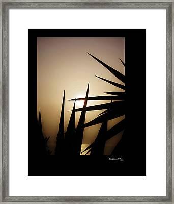 Golden Sunset Framed Print by Xoanxo Cespon