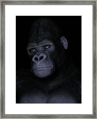 Gorilla Portrait Framed Print by Maynard Ellis