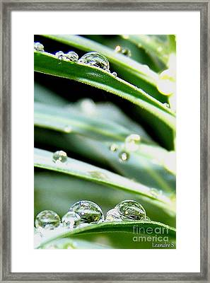 Framed Print featuring the photograph Gouttes by Sylvie Leandre