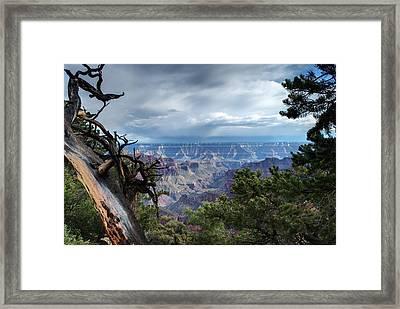 Grand Canyon North Rim After A Storm Framed Print by C Thomas Willard