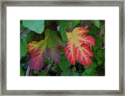 Grape Leaves Framed Print by Lori Leigh