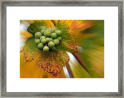 Grapes Framed Print by Jean Noren