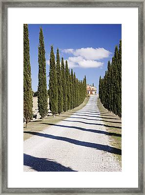 Gravel Road Lined With Cypress Trees Framed Print by Jeremy Woodhouse