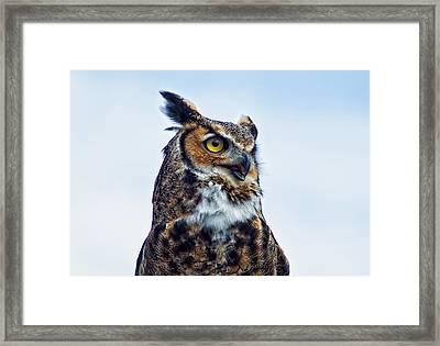 Great Horned Owl Framed Print by Linda Pulvermacher
