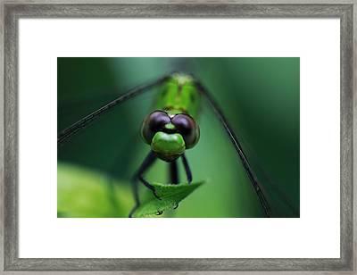 Green Dragon Framed Print by Paul Slebodnick
