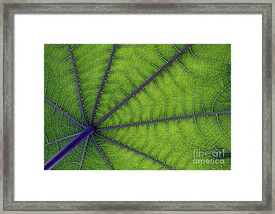Green Leaf Framed Print by Urban Shooters