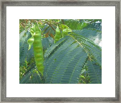 Green Pods Framed Print by Juliana  Blessington
