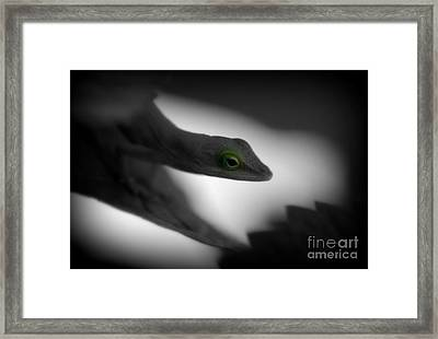 Green With Envy Framed Print