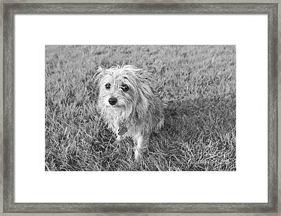 Framed Print featuring the photograph Gremlin by Jeannette Hunt