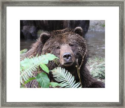 Framed Print featuring the photograph Grizzley - 0011 by S and S Photo