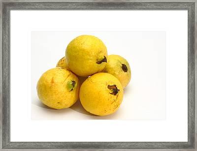 Guava Fruits Framed Print by Gaspar Avila