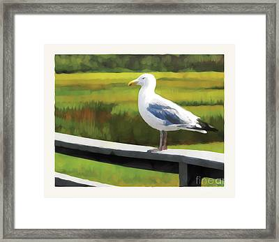 Gull One Framed Print