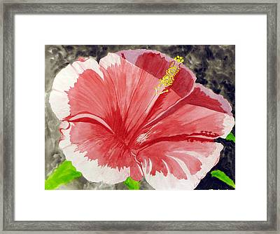 Happy Hibiscus Framed Print