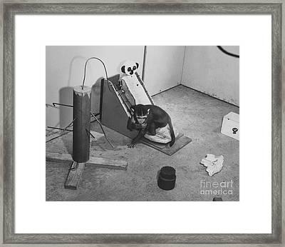 Harlow Monkey Experiment Framed Print