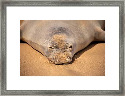 Hawaiian Monk Seal Framed Print by Dave Fleetham - Printscapes