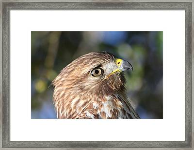 Framed Print featuring the photograph Hawk At Viera by Jeanne Andrews