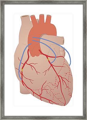 Heart, Artwork Framed Print by Peter Gardiner