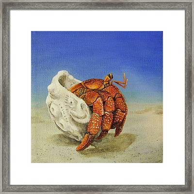 Hermit Crab Framed Print by Cindy D Chinn