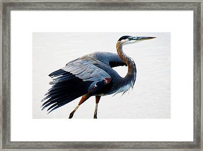 Heron Framed Print by Paulette Thomas