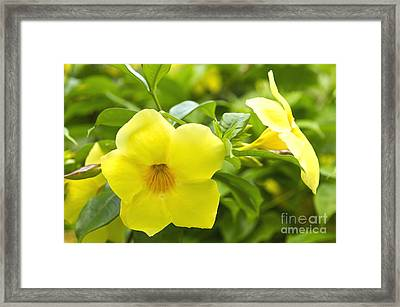 Hibiscus Framed Print by Blink Images