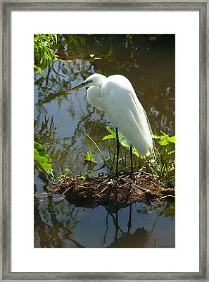Hiding Place Framed Print by Carolyn Marshall