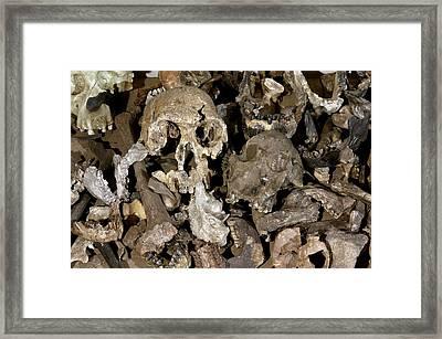 Hominid Skull Casts Framed Print by Volker Steger