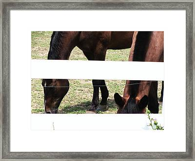 Horse-3 Framed Print by Todd Sherlock