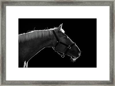 Horse Framed Print by Arman Zhenikeyev - professional photographer from Kazakhstan