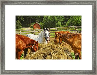 Horses At The Ranch Framed Print