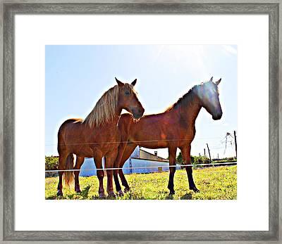Horses Framed Print by Jenny Senra Pampin