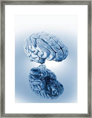 Human Brain, Artwork Framed Print by Victor Habbick Visions
