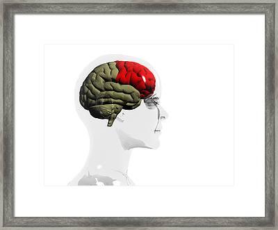 Human Brain, Frontal Lobe Framed Print by Christian Darkin