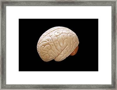 Human Brain Framed Print by Richard Newstead